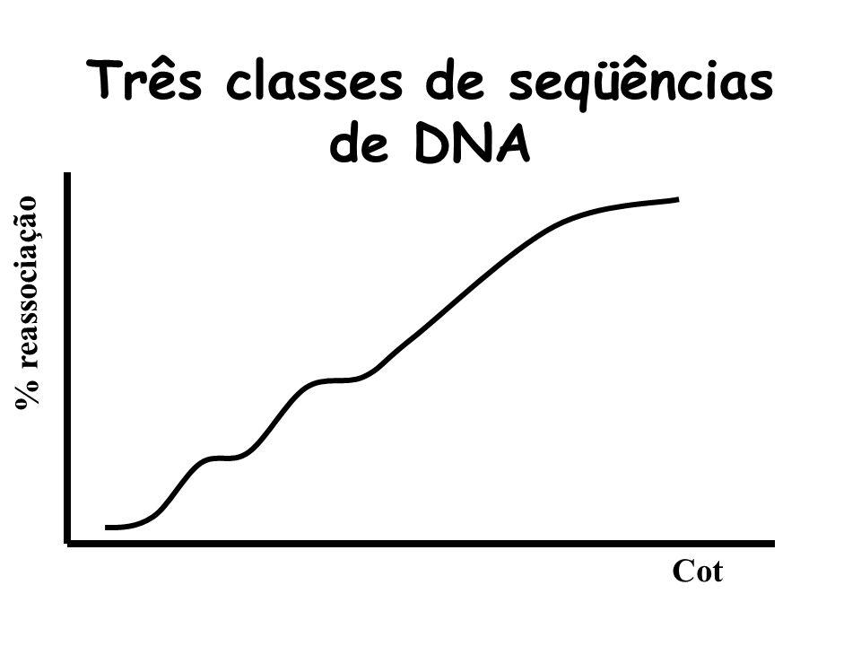 Três classes de seqüências de DNA