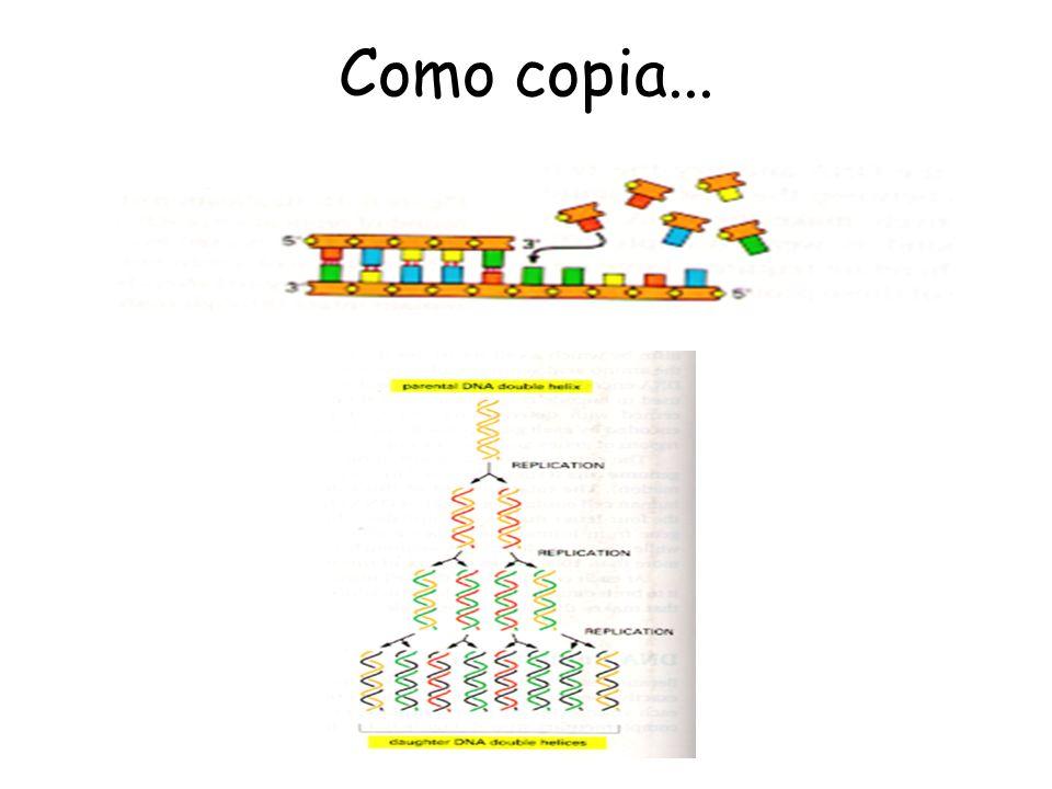 Como copia...