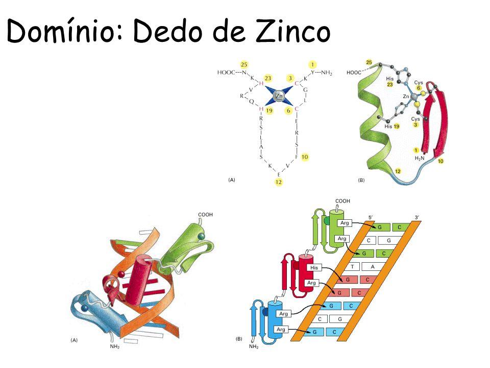 Domínio: Dedo de Zinco