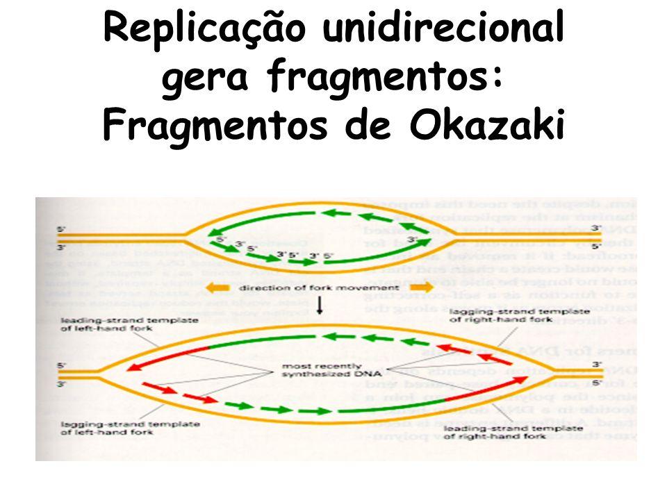 Replicação unidirecional gera fragmentos: Fragmentos de Okazaki