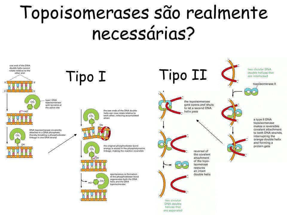Topoisomerases são realmente necessárias