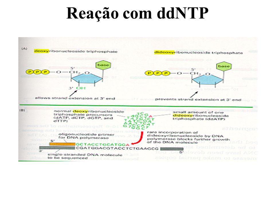Reação com ddNTP