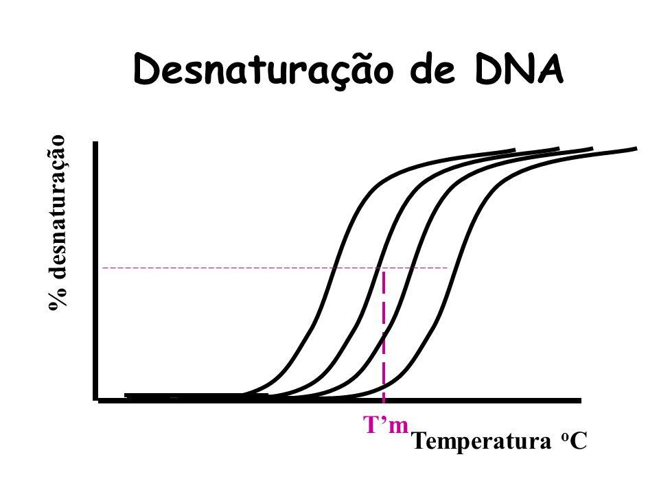 Desnaturação de DNA % desnaturação T'm Temperatura oC