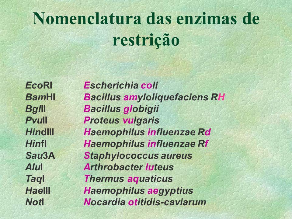 Nomenclatura das enzimas de restrição
