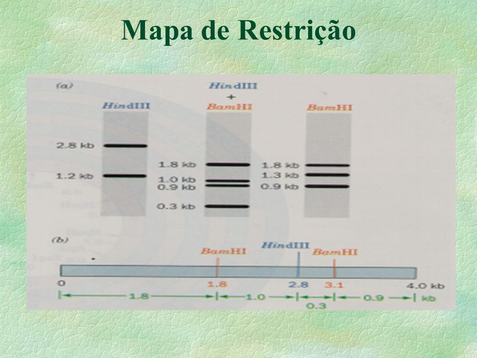 Mapa de Restrição