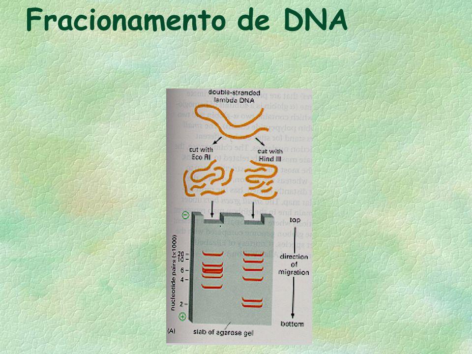 Fracionamento de DNA