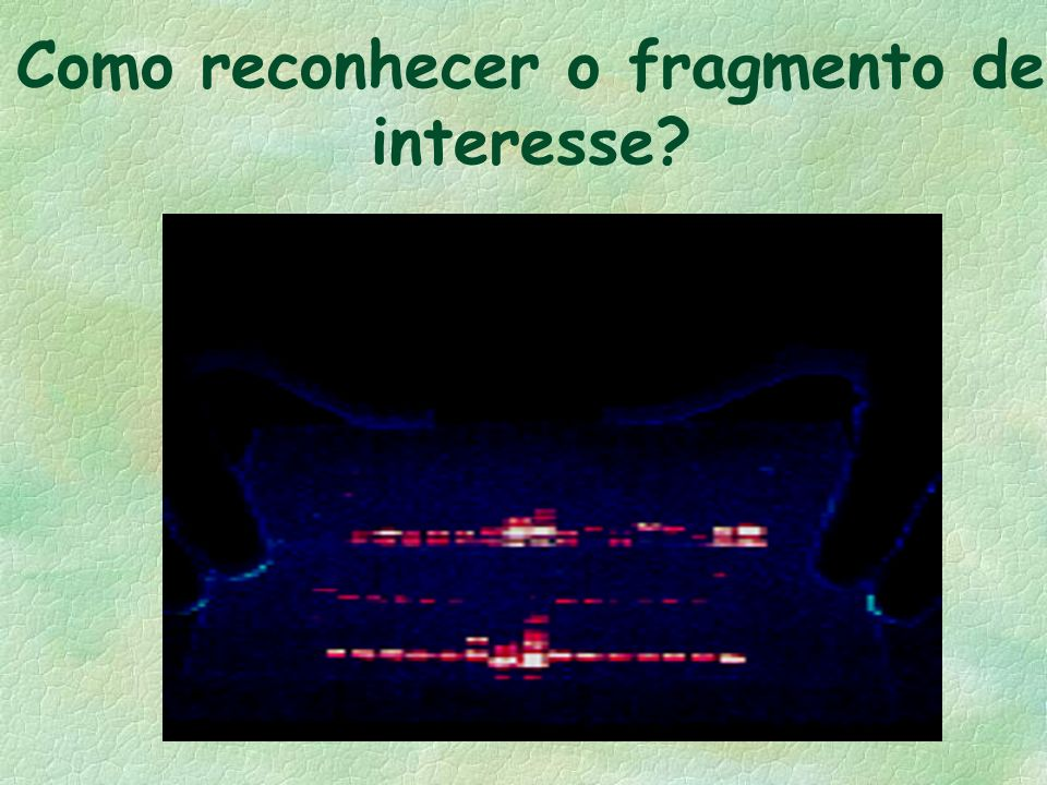 Como reconhecer o fragmento de interesse