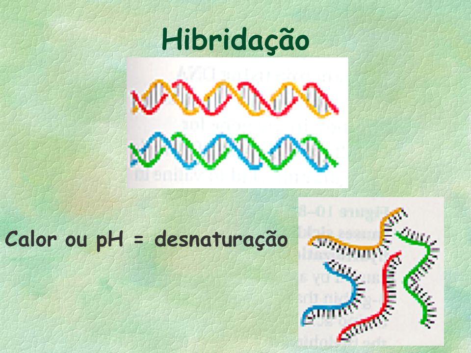 Hibridação Calor ou pH = desnaturação