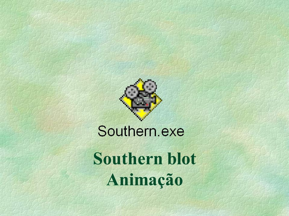 Southern blot Animação