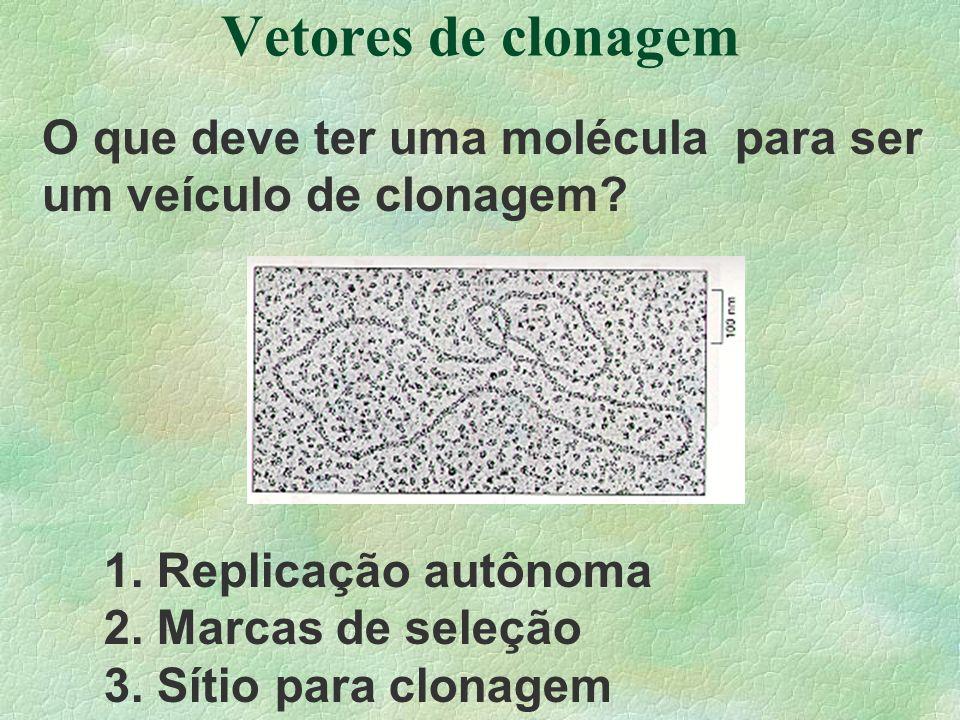 Vetores de clonagem O que deve ter uma molécula para ser um veículo de clonagem 1. Replicação autônoma.