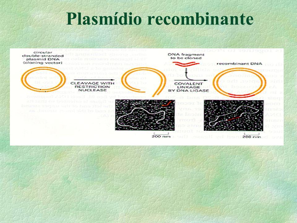 Plasmídio recombinante