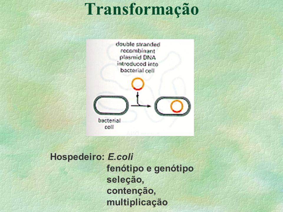 Transformação Hospedeiro: E.coli fenótipo e genótipo seleção,