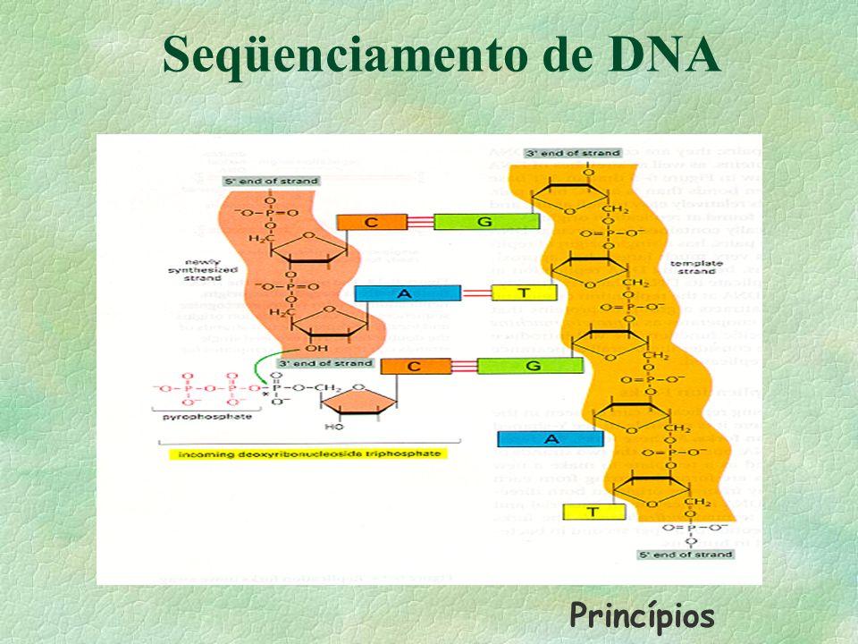 Seqüenciamento de DNA Princípios