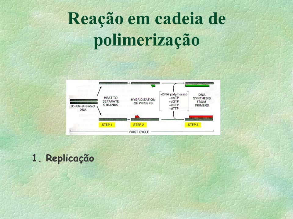 Reação em cadeia de polimerização