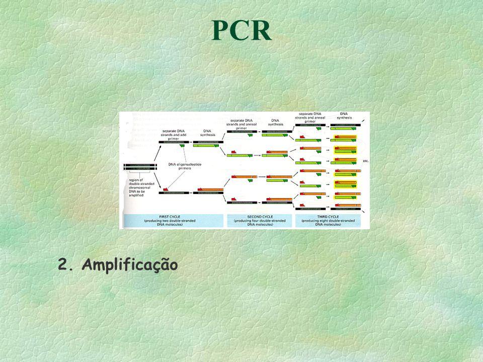 PCR 2. Amplificação