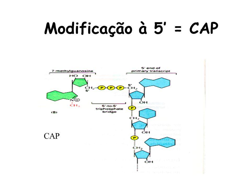 Modificação à 5' = CAP CAP