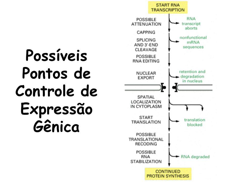 Possíveis Pontos de Controle de Expressão Gênica