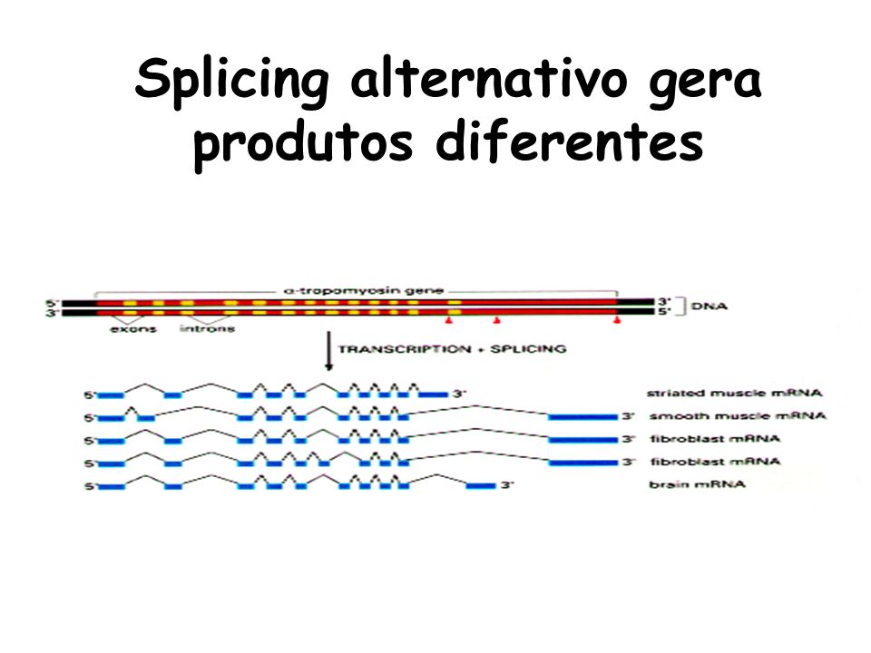 Splicing alternativo gera produtos diferentes
