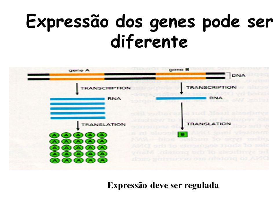 Expressão dos genes pode ser diferente
