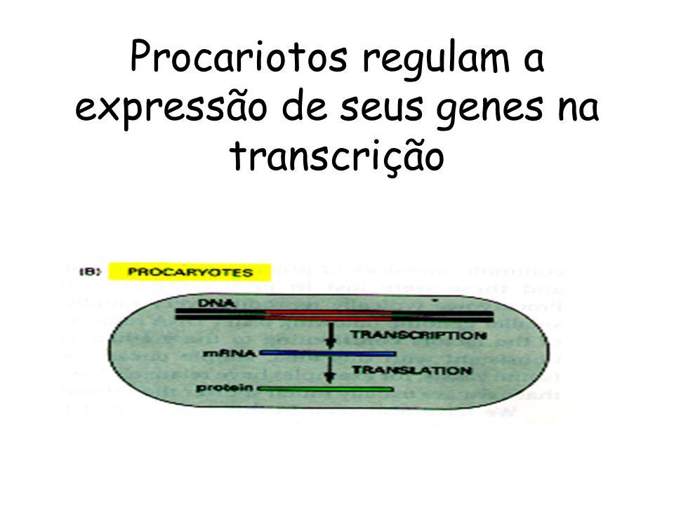Procariotos regulam a expressão de seus genes na transcrição
