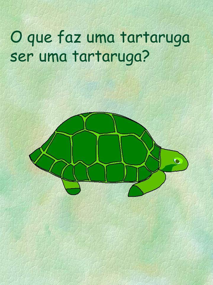 O que faz uma tartaruga ser uma tartaruga