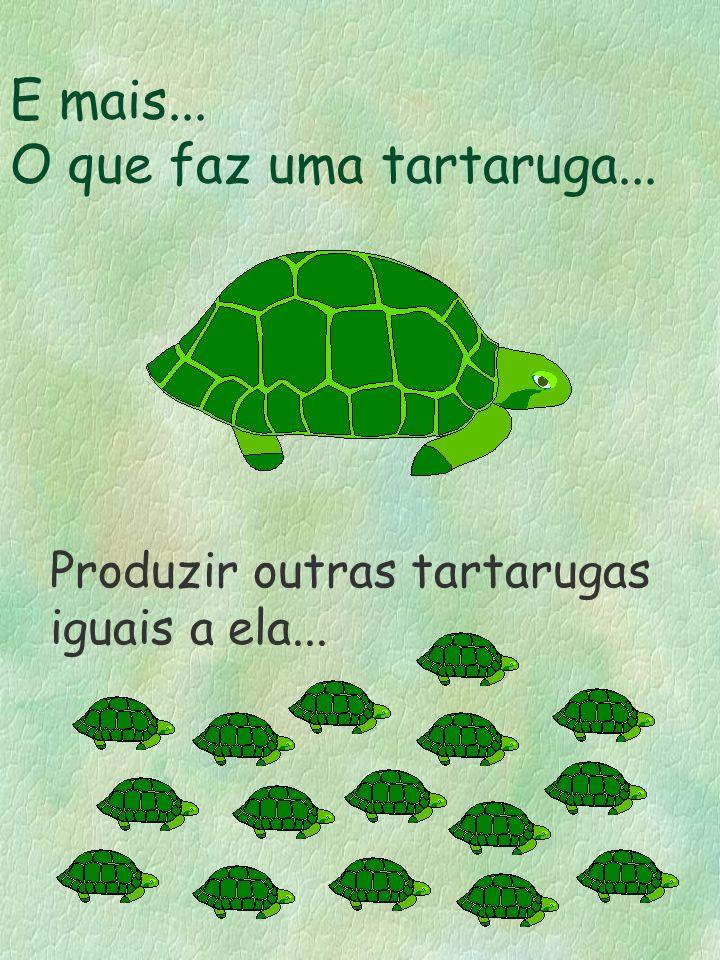 E mais... O que faz uma tartaruga...