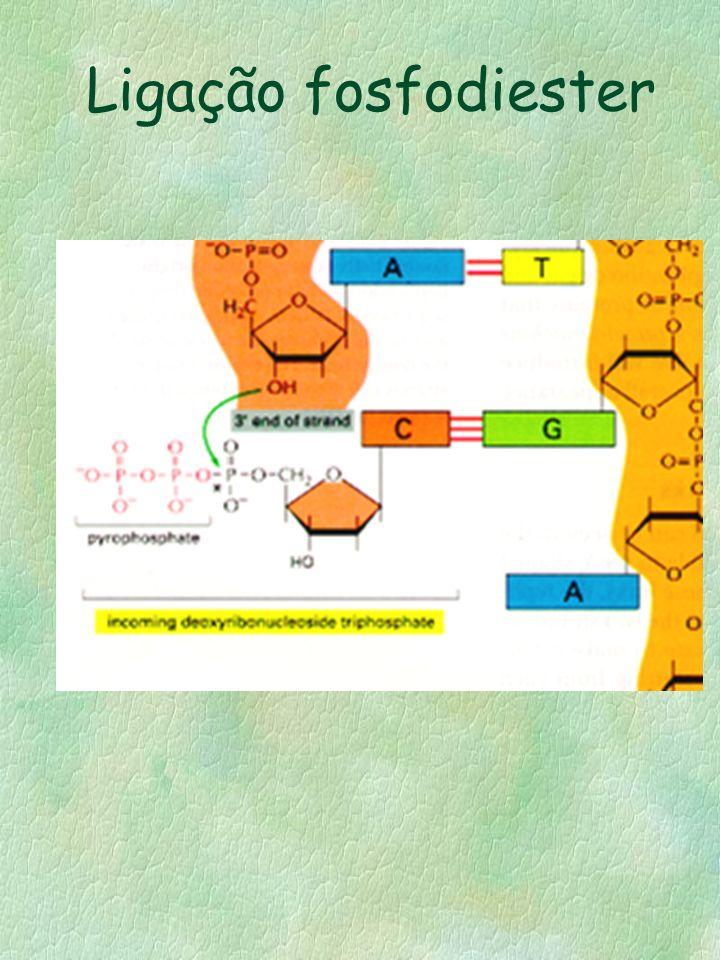 Ligação fosfodiester