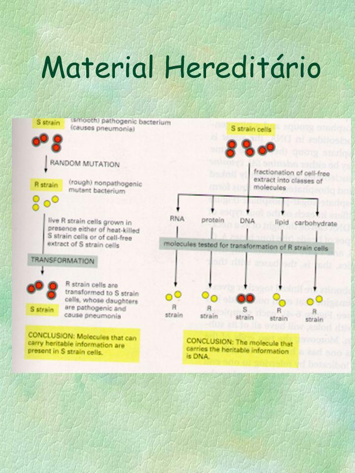 Material Hereditário
