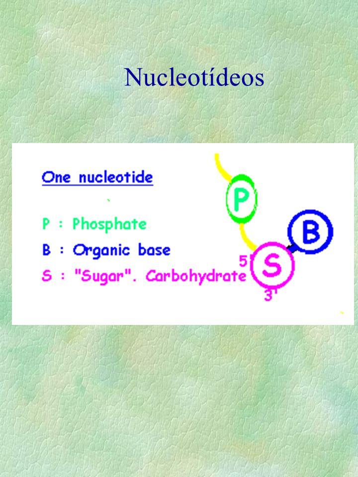 Nucleotídeos
