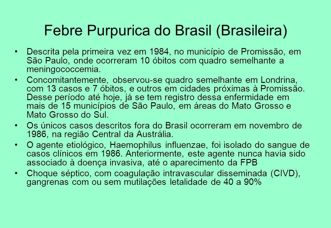 Febre Purpurica do Brasil (Brasileira)