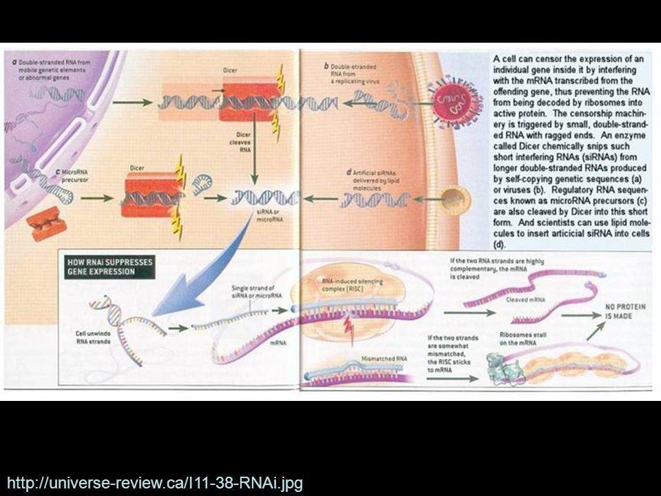 http://universe-review.ca/I11-38-RNAi.jpg