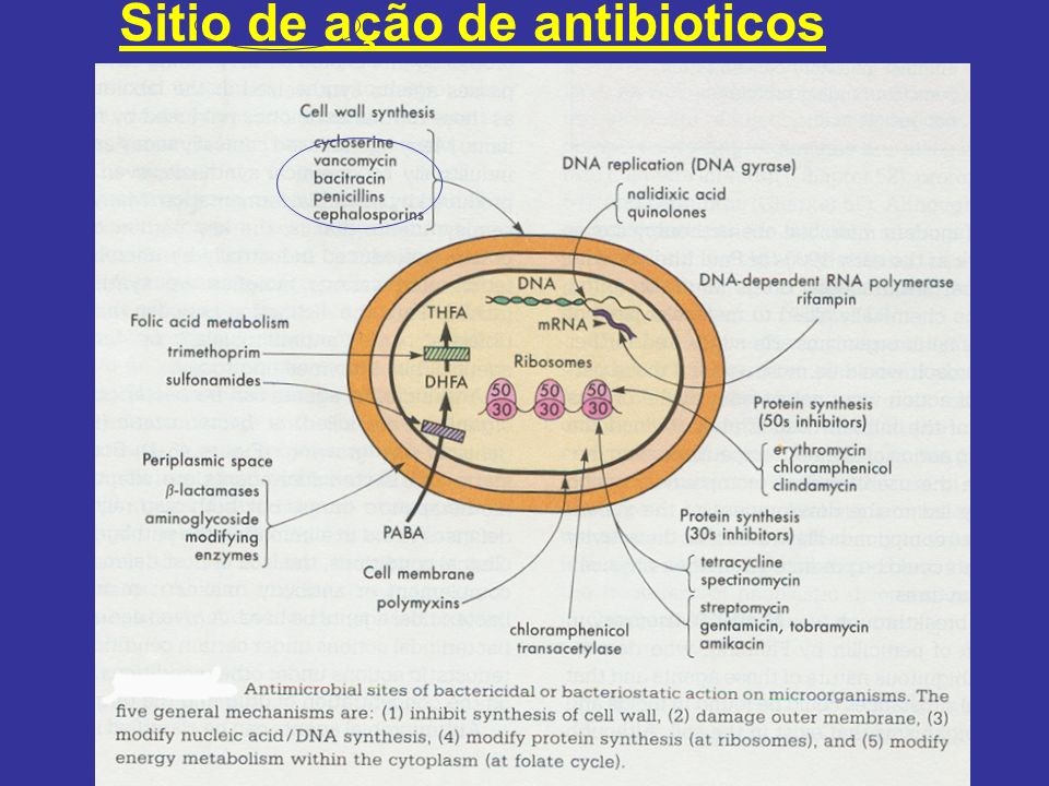 Sitio de ação de antibioticos