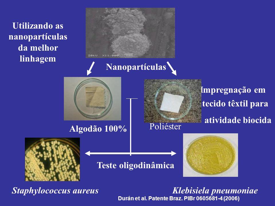 Utilizando as nanopartículas da melhor linhagem