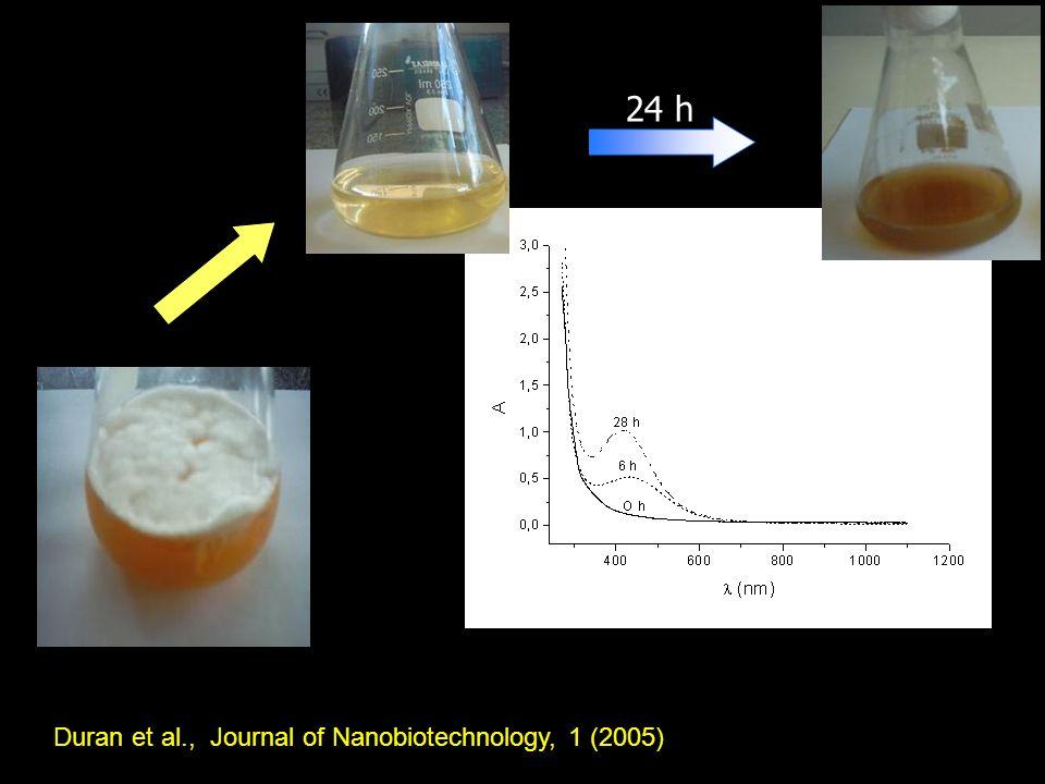 24 h Duran et al., Journal of Nanobiotechnology, 1 (2005)