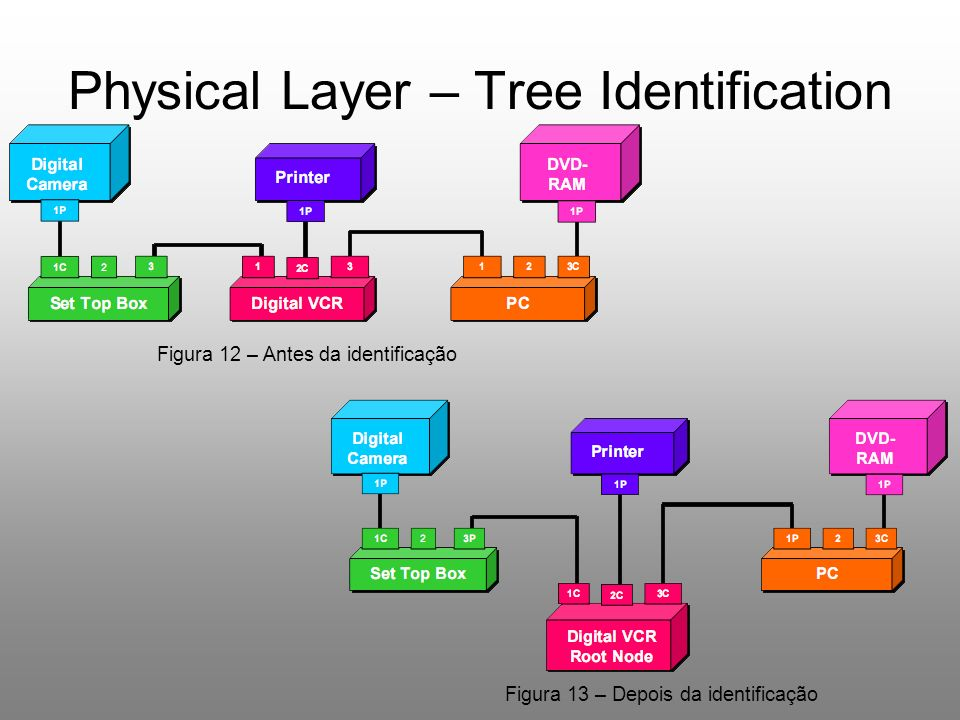 Physical Layer – Tree Identification