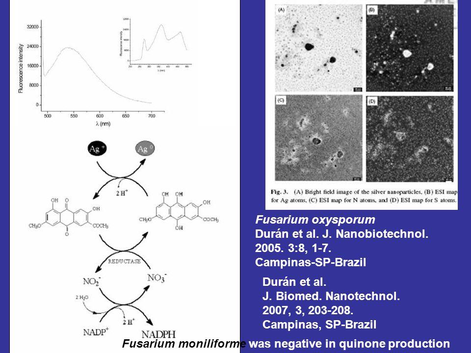 Fusarium oxysporum Durán et al. J. Nanobiotechnol. 2005. 3:8, 1-7. Campinas-SP-Brazil. Durán et al.