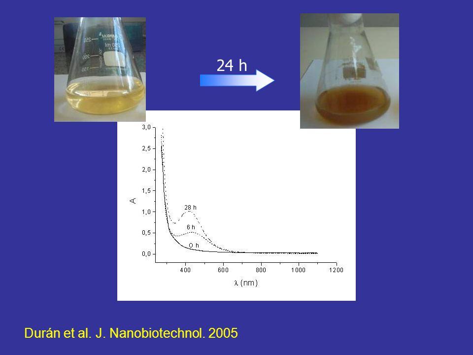 24 h Durán et al. J. Nanobiotechnol. 2005
