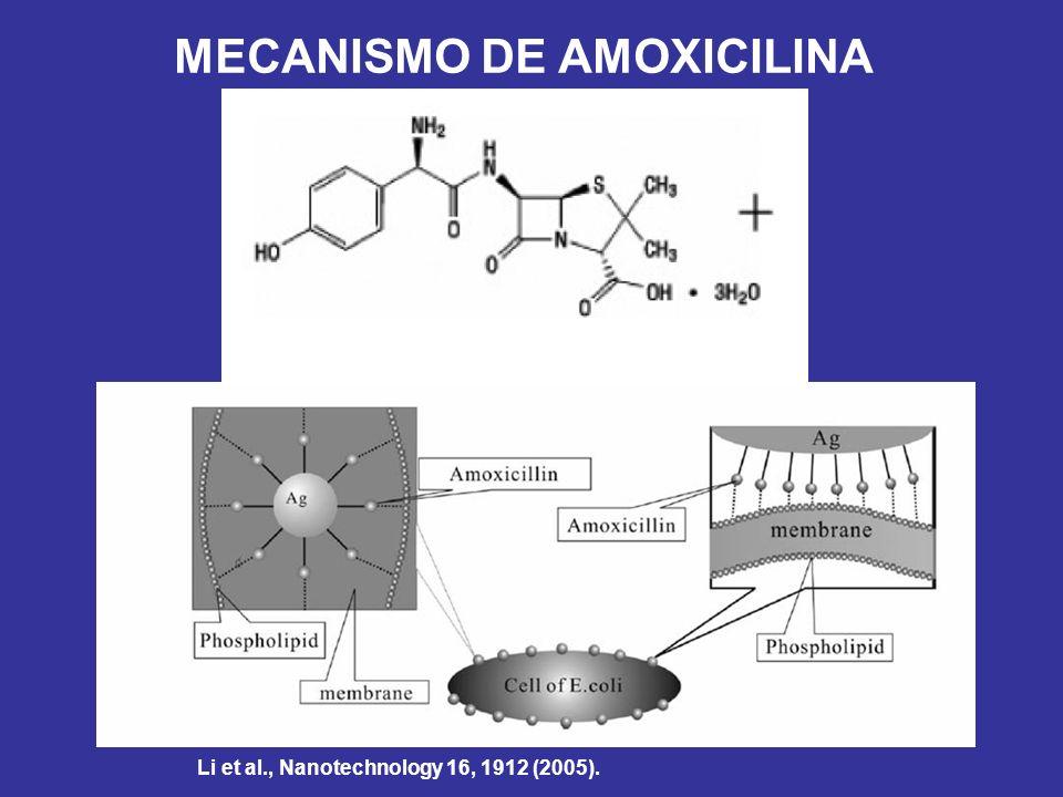 MECANISMO DE AMOXICILINA