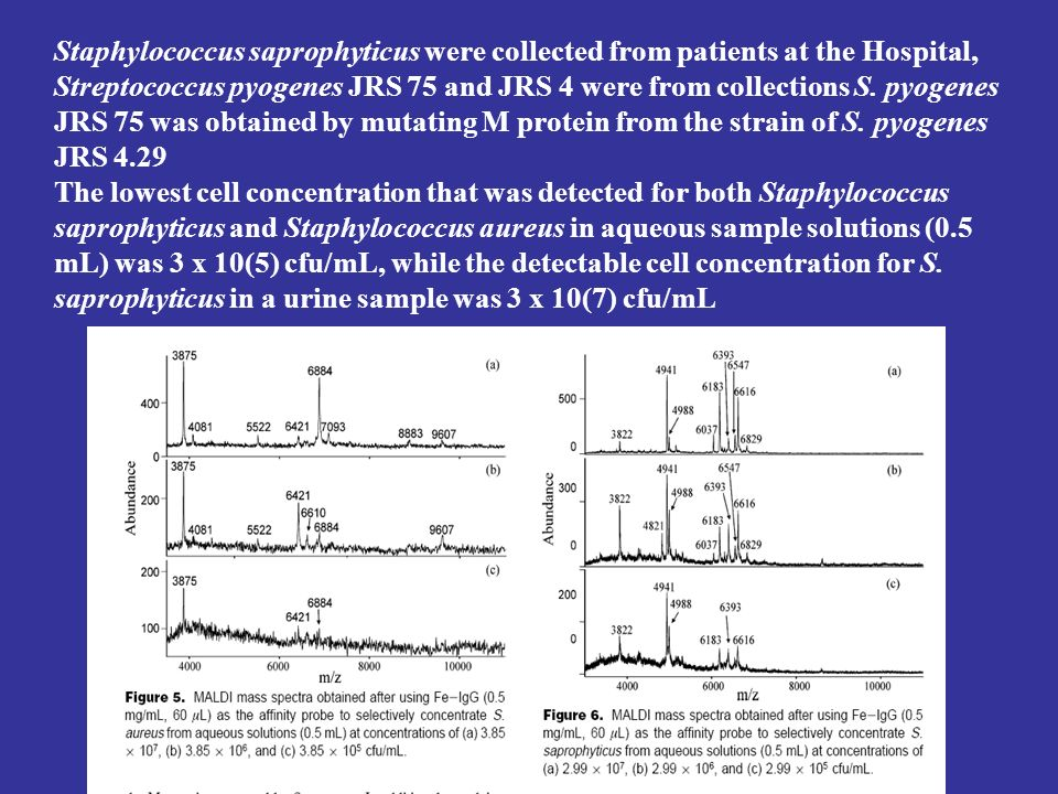 Staphylococcus saprophyticus were collected from patients at the Hospital, Streptococcus pyogenes JRS 75 and JRS 4 were from collections S. pyogenes JRS 75 was obtained by mutating M protein from the strain of S. pyogenes JRS 4.29