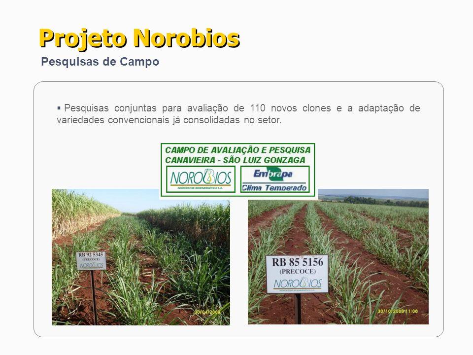 Projeto Norobios Pesquisas de Campo