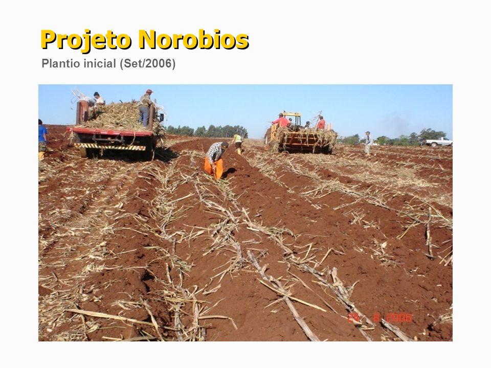 Projeto Norobios Plantio inicial (Set/2006)
