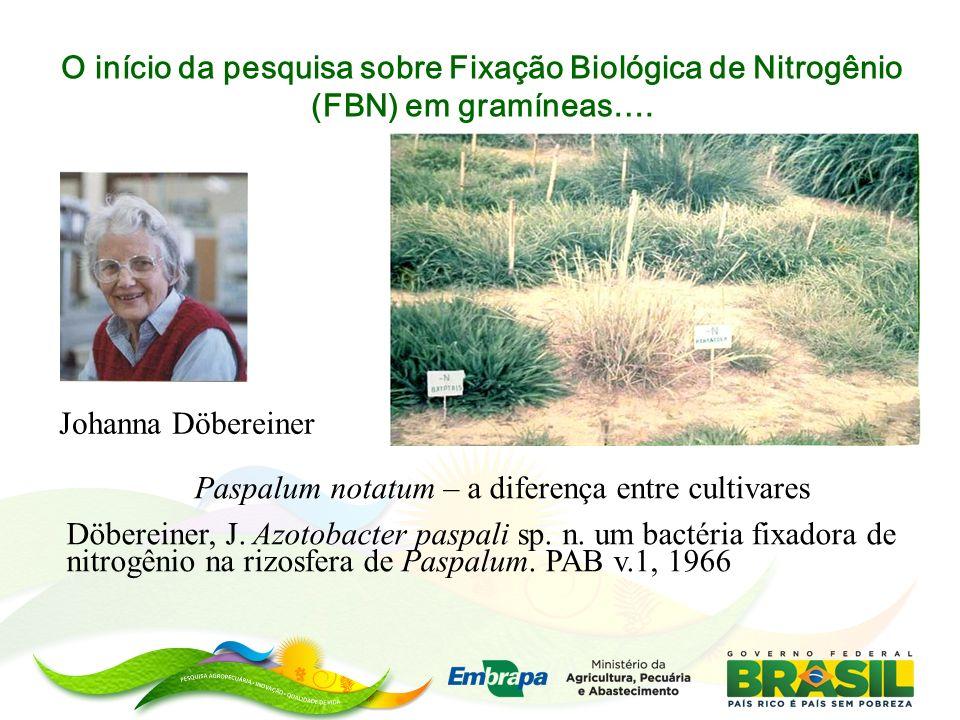 O início da pesquisa sobre Fixação Biológica de Nitrogênio (FBN) em gramíneas….