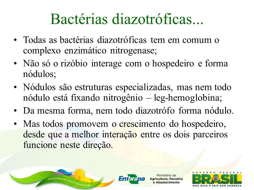 Bactérias diazotróficas...
