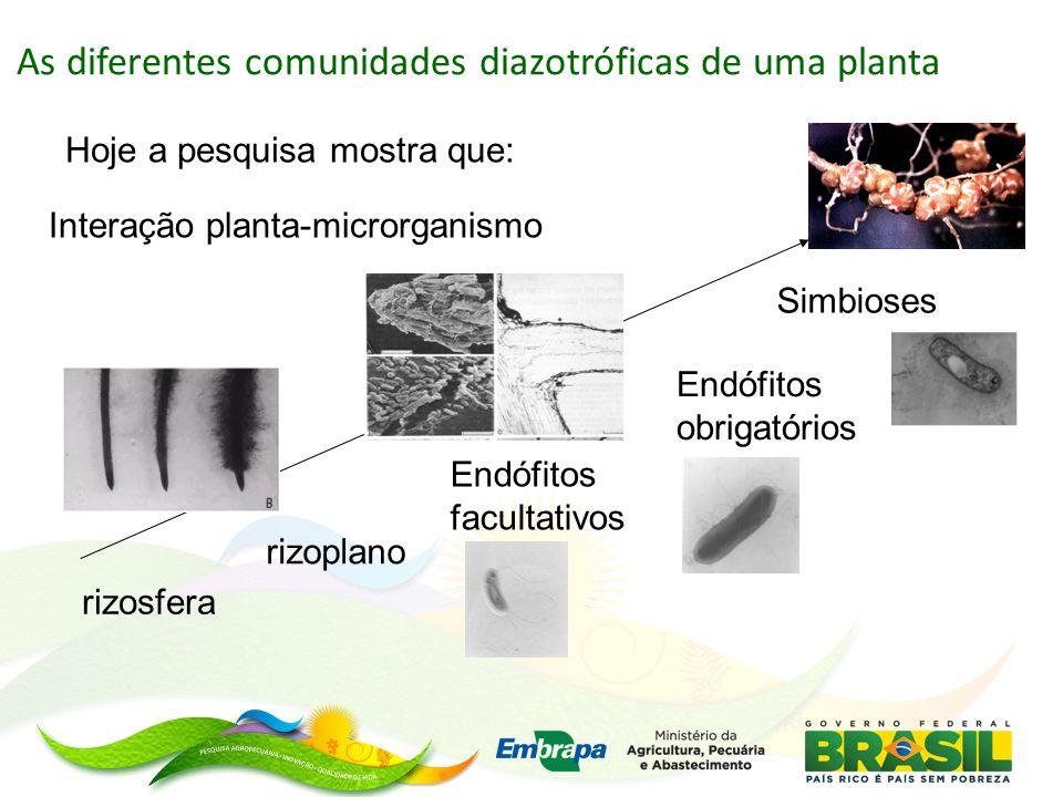 As diferentes comunidades diazotróficas de uma planta