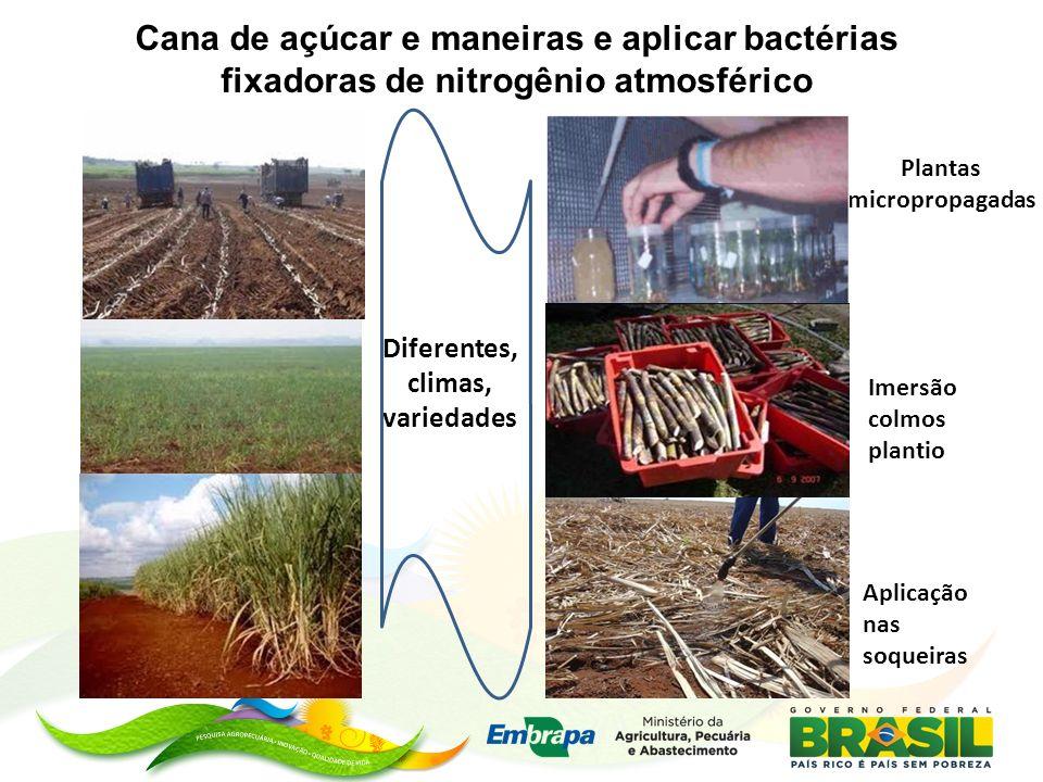 Plantas micropropagadas Diferentes, climas, variedades