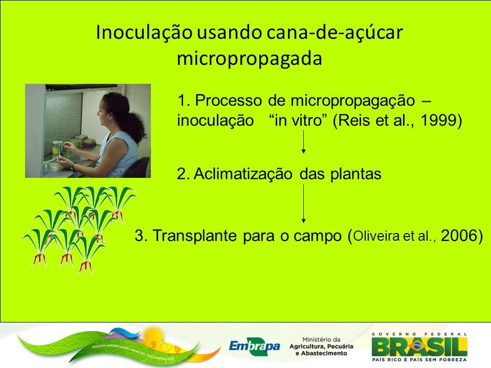 Inoculação usando cana-de-açúcar micropropagada