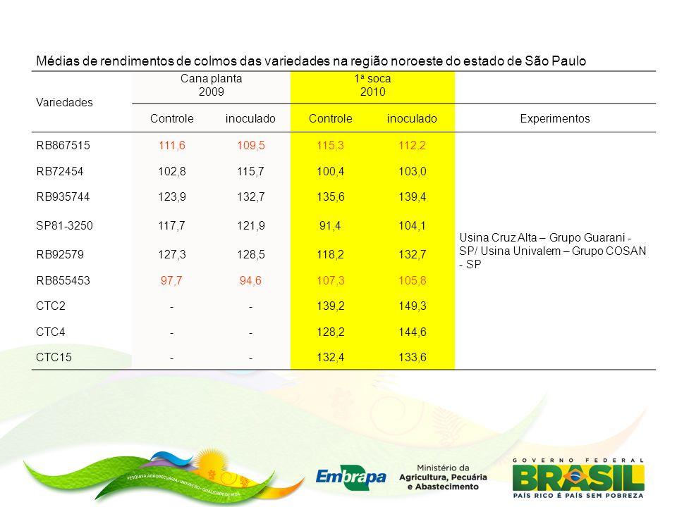 Médias de rendimentos de colmos das variedades na região noroeste do estado de São Paulo