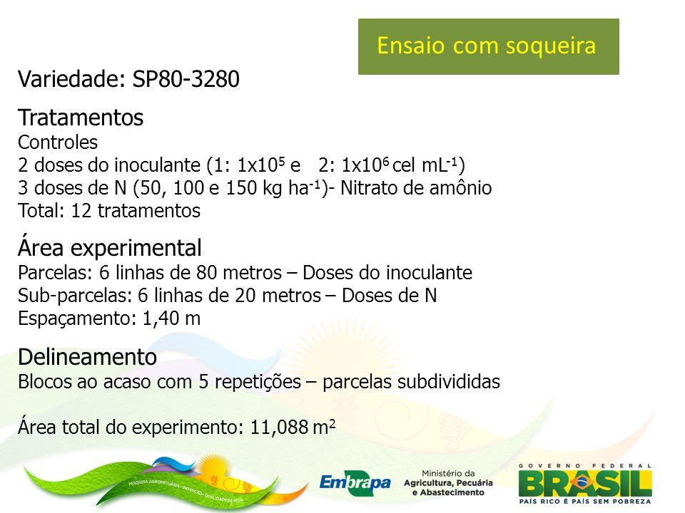 Ensaio com soqueira Variedade: SP80-3280 Tratamentos Área experimental