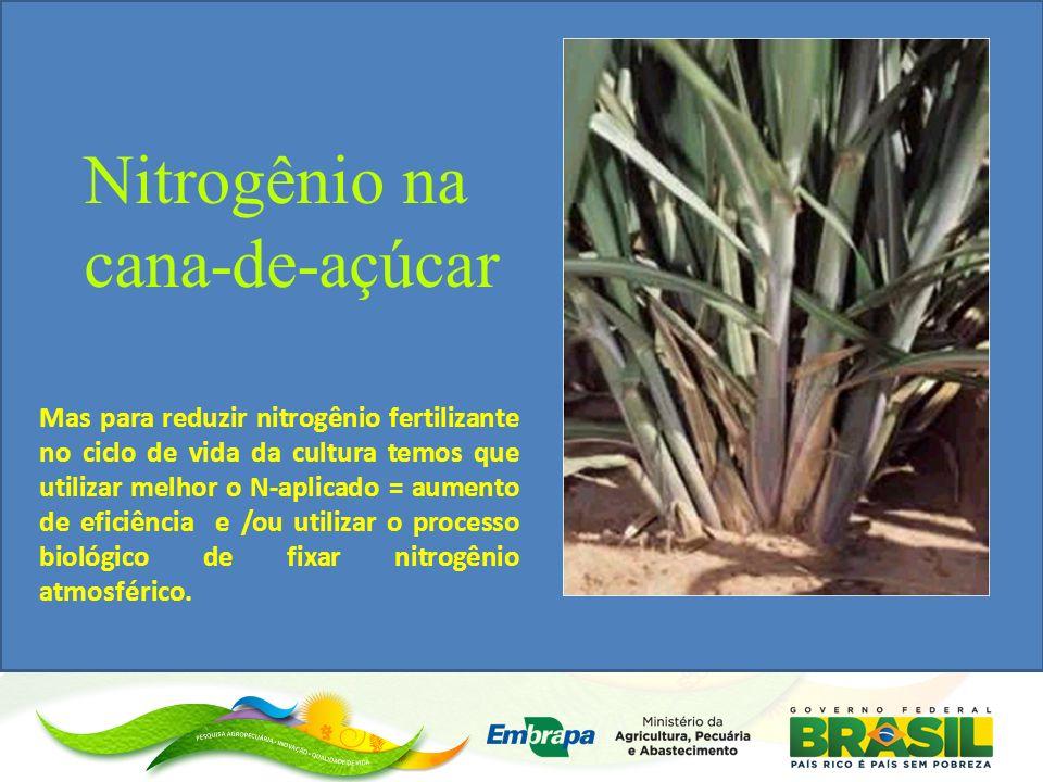 Nitrogênio na cana-de-açúcar