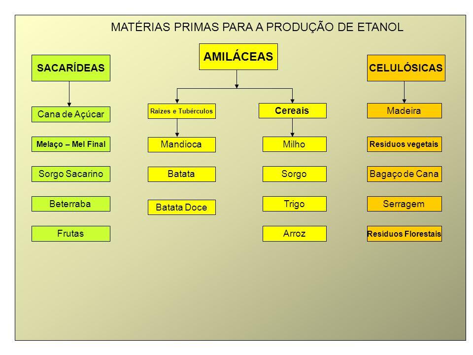 MATÉRIAS PRIMAS PARA A PRODUÇÃO DE ETANOL